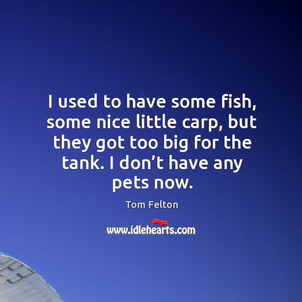 I used to have some fish, some nice little carp, but they got too big for the tank. I don't have any pets now. Image