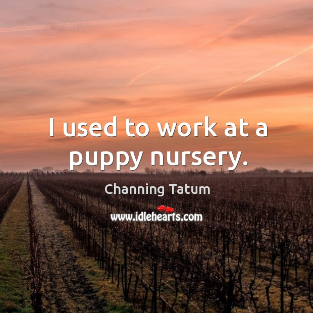 I used to work at a puppy nursery. Image
