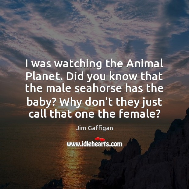 Jim Gaffigan Picture Quote image saying: I was watching the Animal Planet. Did you know that the male