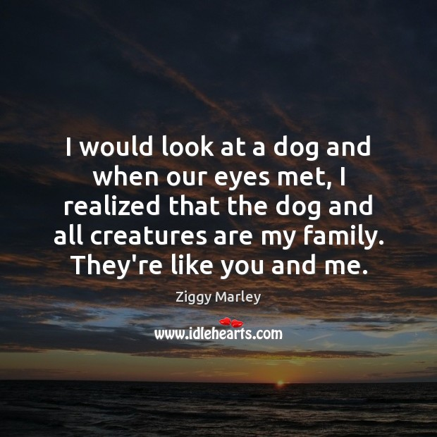 I would look at a dog and when our eyes met, I Ziggy Marley Picture Quote
