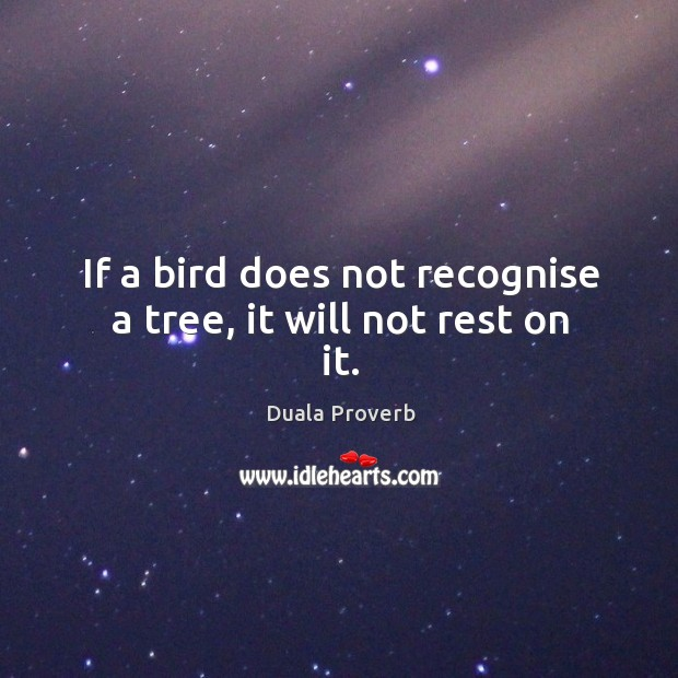 If a bird does not recognise a tree, it will not rest on it. Duala Proverbs Image