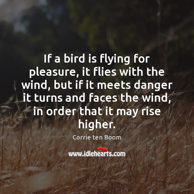 Image, If a bird is flying for pleasure, it flies with the wind,