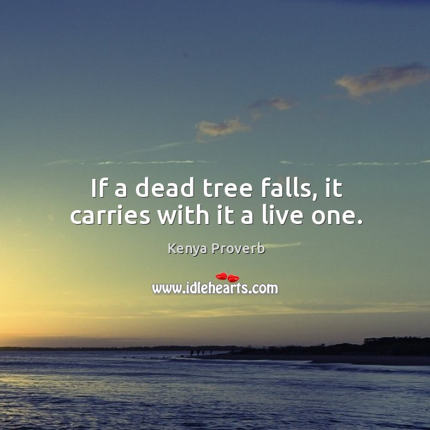 If a dead tree falls, it carries with it a live one. Kenya Proverbs Image