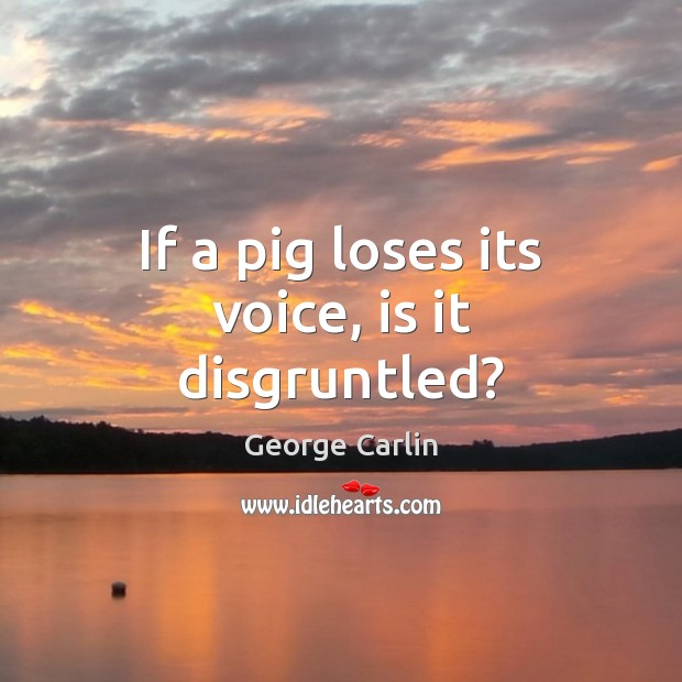 If a pig loses its voice, is it disgruntled? Image