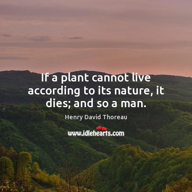 If a plant cannot live according to its nature, it dies; and so a man. Image