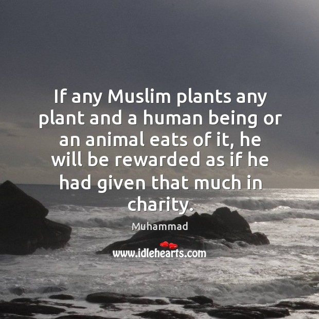 Image, If any Muslim plants any plant and a human being or an