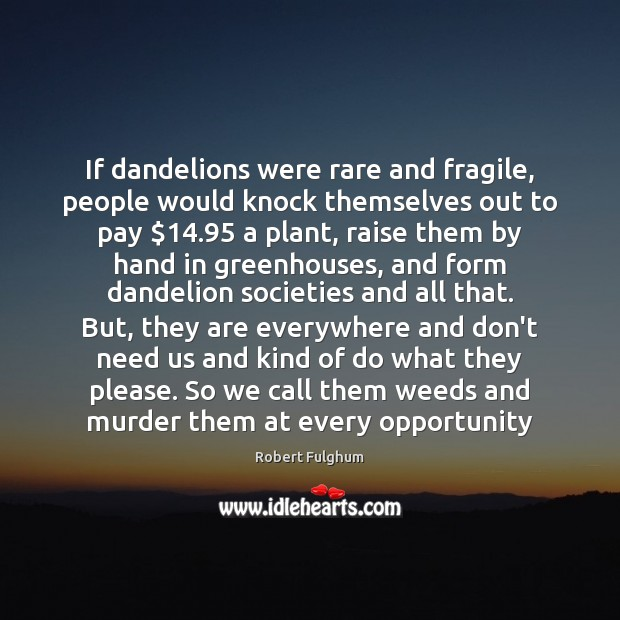 Image, If dandelions were rare and fragile, people would knock themselves out to
