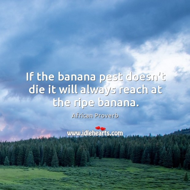 Image, If the banana pest doesn't die it will always reach at the ripe banana.