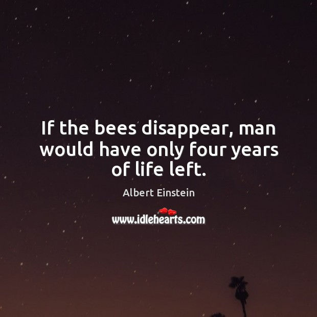 Image, If the bees disappear, man would have only four years of life left.