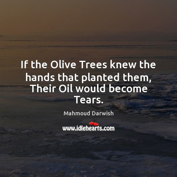 Image, If the Olive Trees knew the hands that planted them, Their Oil would become Tears.