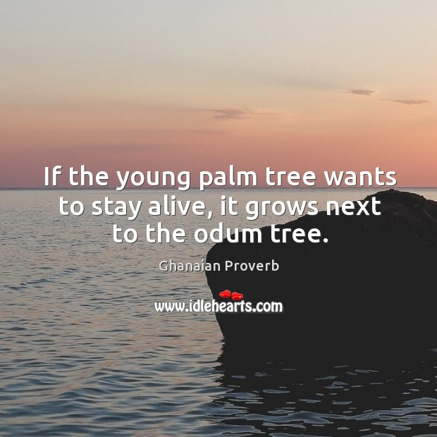 Image, If the young palm tree wants to stay alive, it grows next to the odum tree.