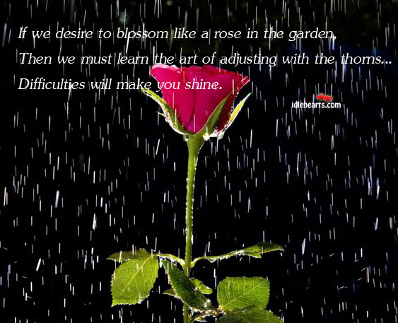 If We Desire To Blossom Like A Rose In The Garden, Then We…