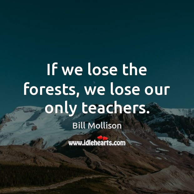If we lose the forests, we lose our only teachers. Bill Mollison Picture Quote