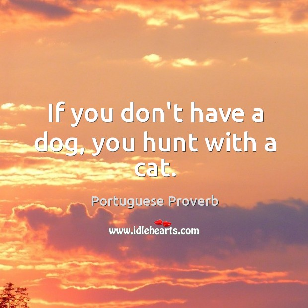 Image about If you don't have a dog, you hunt with a cat.