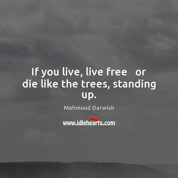 Image, If you live, live free   or die like the trees, standing up.