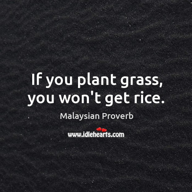 If you plant grass, you won't get rice. Malaysian Proverbs Image