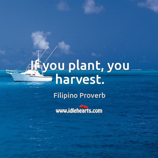 If you plant, you harvest. Filipino Proverbs Image