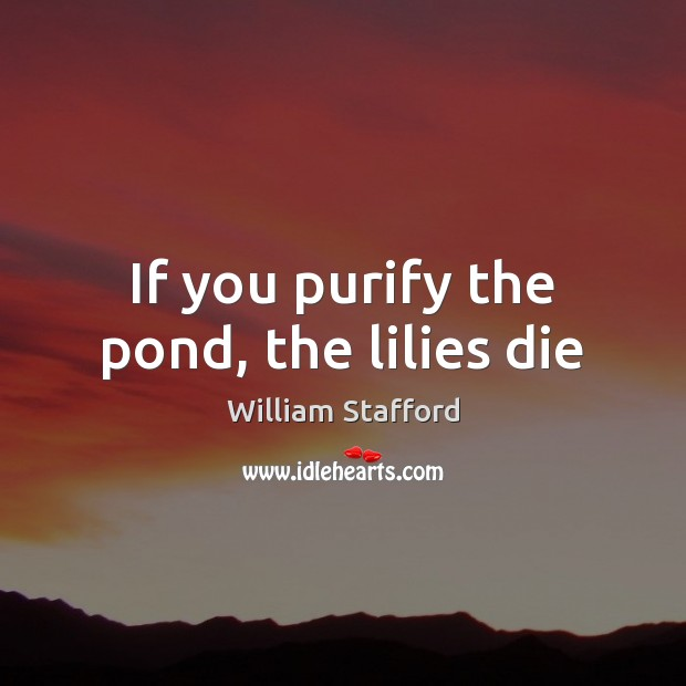 If you purify the pond, the lilies die Image