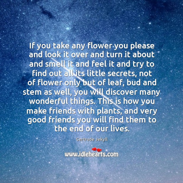 If you take any flower you please and look it over and Gertrude Jekyll Picture Quote