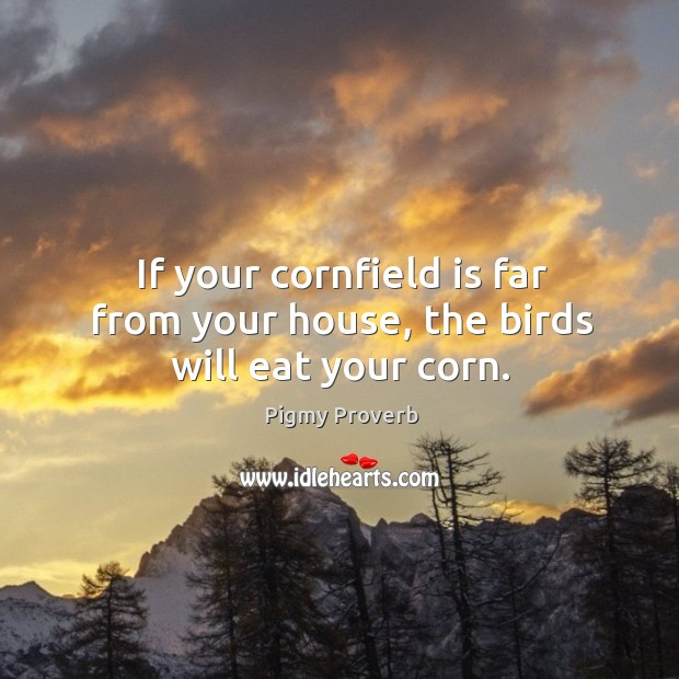 If your cornfield is far from your house, the birds will eat your corn. Pigmy Proverbs Image