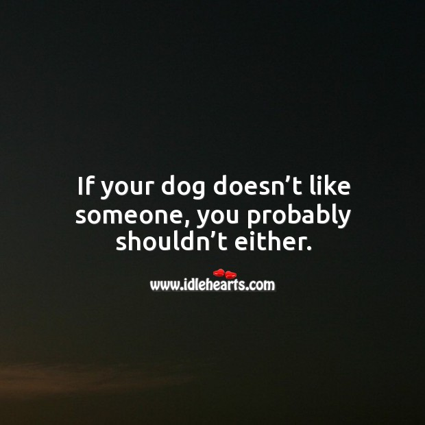 If your dog doesn't like someone, you probably shouldn't either. Image