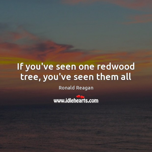 Image, If you've seen one redwood tree, you've seen them all