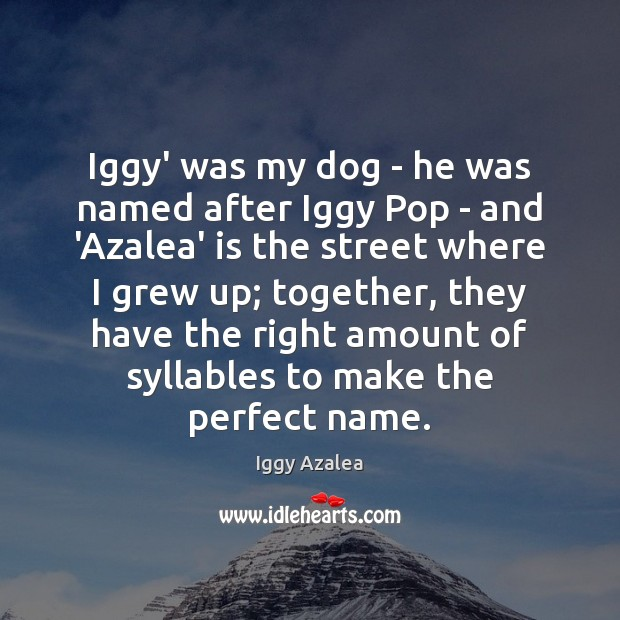 Image, Iggy' was my dog – he was named after Iggy Pop –