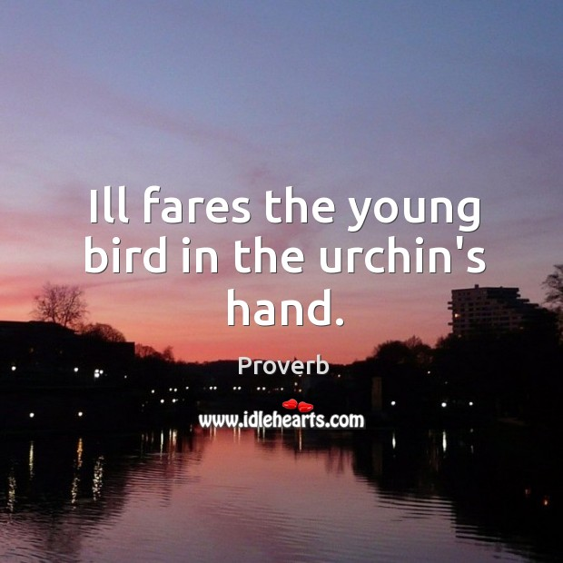 Ill fares the young bird in the urchin's hand. Image
