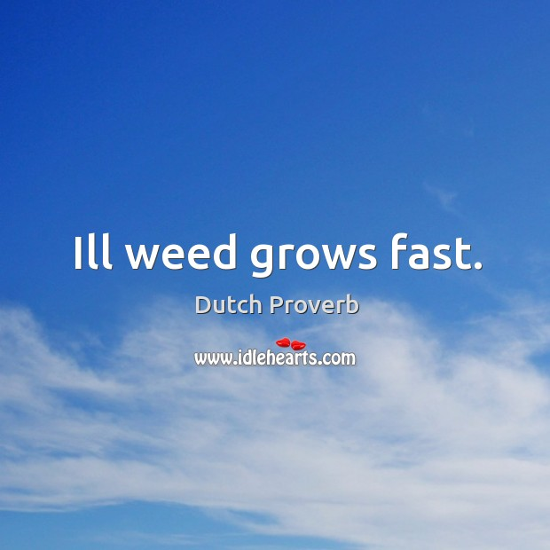 Image, Ill weed grows fast.