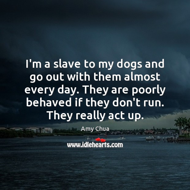 I'm a slave to my dogs and go out with them almost Amy Chua Picture Quote