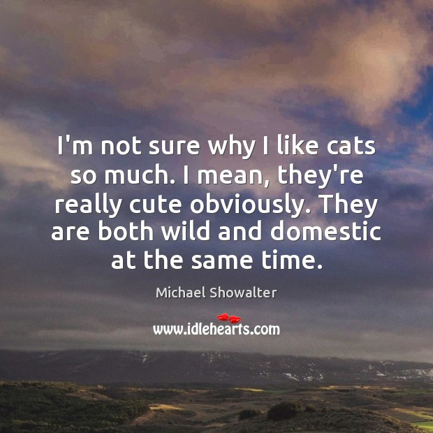 I'm not sure why I like cats so much. I mean, they're Image