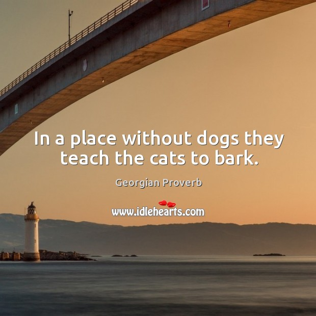 In a place without dogs they teach the cats to bark. Georgian Proverbs Image