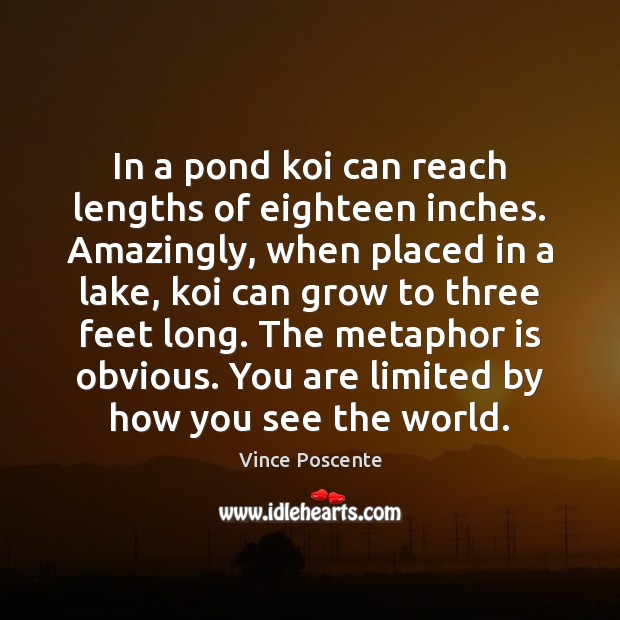 Image, In a pond koi can reach lengths of eighteen inches. Amazingly, when