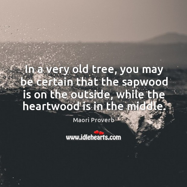 In a very old tree, you may be certain that the sapwood is on the outside Maori Proverbs Image