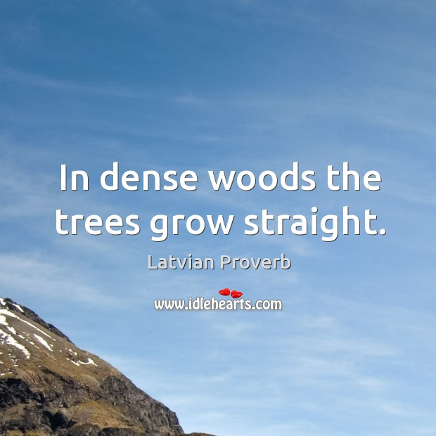 In dense woods the trees grow straight. Latvian Proverbs Image