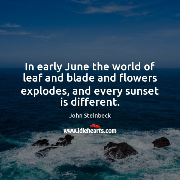 In early June the world of leaf and blade and flowers explodes, John Steinbeck Picture Quote