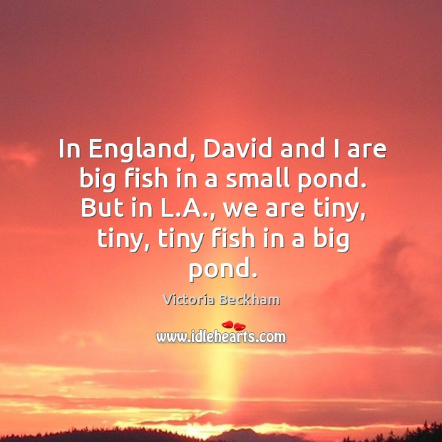 In england, david and I are big fish in a small pond. But in l.a., we are tiny, tiny, tiny fish in a big pond. Image