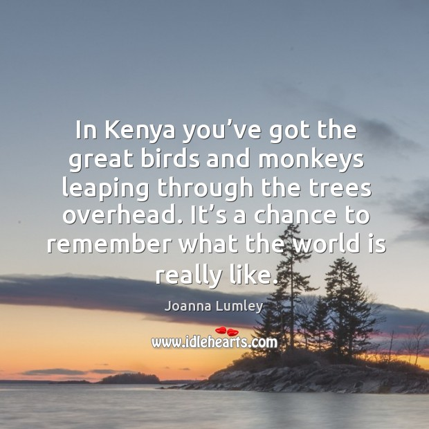 In kenya you've got the great birds and monkeys leaping through the trees overhead. Joanna Lumley Picture Quote
