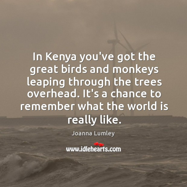In Kenya you've got the great birds and monkeys leaping through the Joanna Lumley Picture Quote