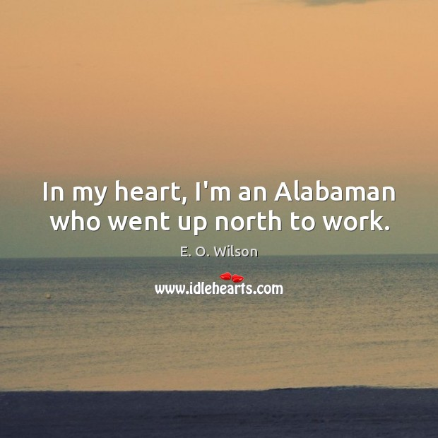 In my heart, I'm an Alabaman who went up north to work. E. O. Wilson Picture Quote