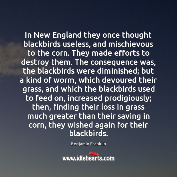 In New England they once thought blackbirds useless, and mischievous to the Benjamin Franklin Picture Quote