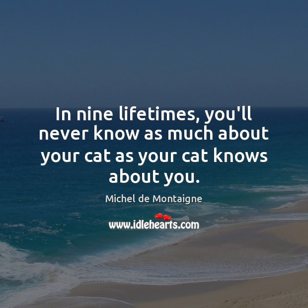 In nine lifetimes, you'll never know as much about your cat as your cat knows about you. Image