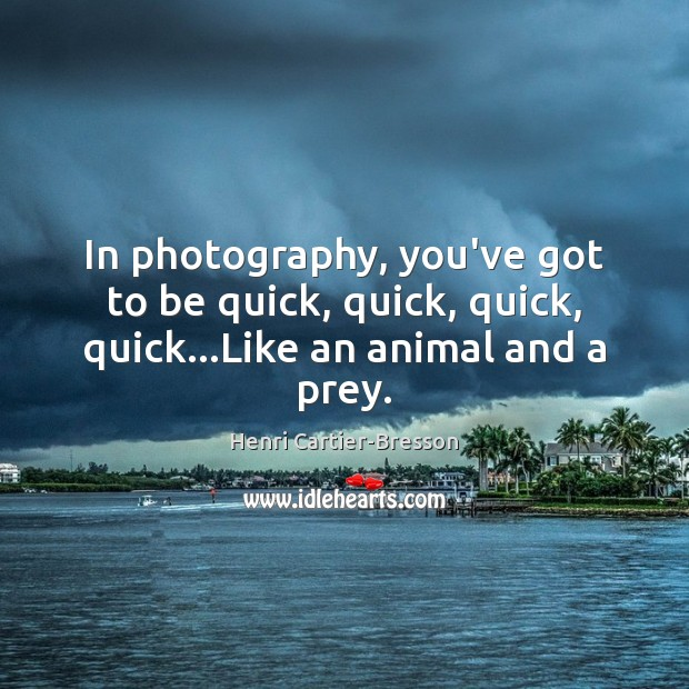 Image, In photography, you've got to be quick, quick, quick, quick…Like an animal and a prey.