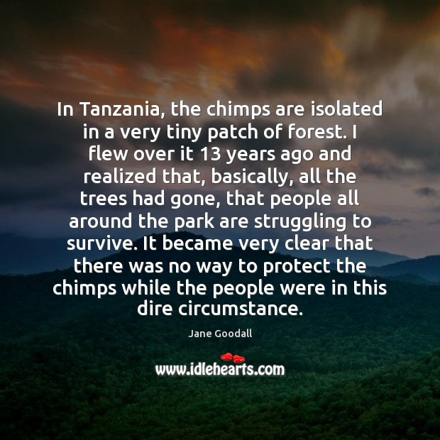 Image, In Tanzania, the chimps are isolated in a very tiny patch of