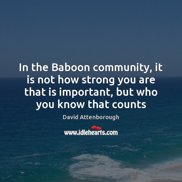 Image, In the Baboon community, it is not how strong you are that