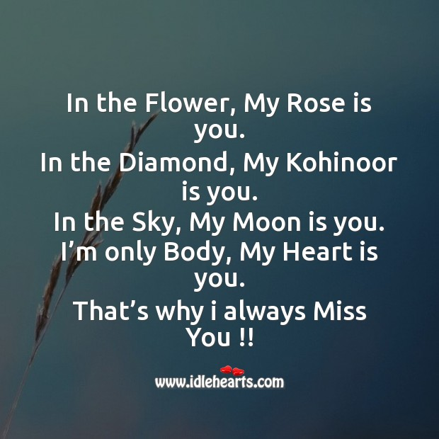 In the flower, my rose is you. Image
