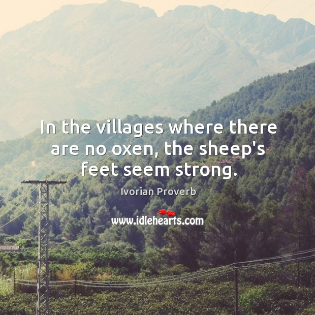 In the villages where there are no oxen, the sheep's feet seem strong. Ivorian Proverbs Image