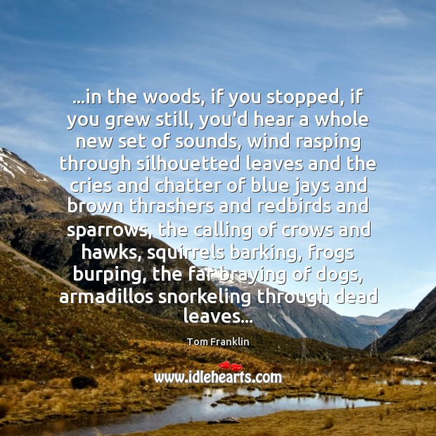 Image, …in the woods, if you stopped, if you grew still, you'd hear