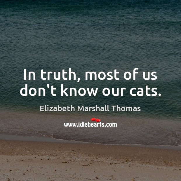 In truth, most of us don't know our cats. Image
