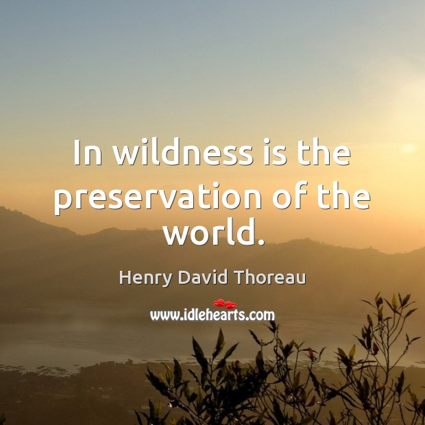 In wildness is the preservation of the world. Image